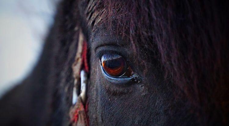 cheval triste