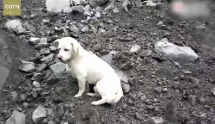 chine chien
