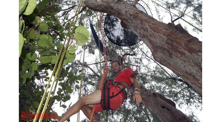 nicolas godard grimpe d'arbre hermitage