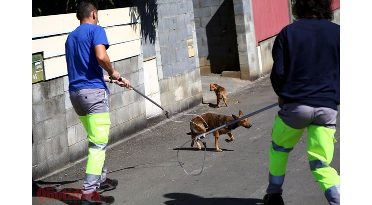 spa chiens errants fourriere