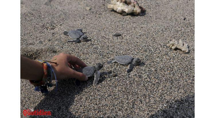 bébés tortues mise à l'eau kelonia saint leu