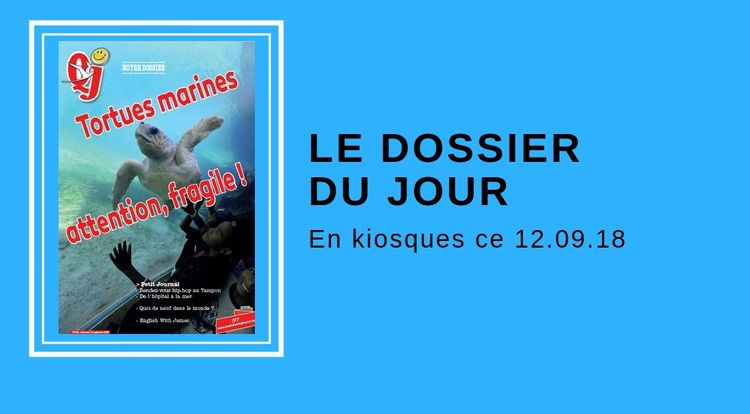 dossier 12 septembre tortues