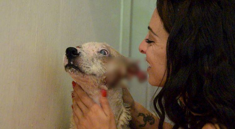 maurice, dodo le chien sauvé par une française